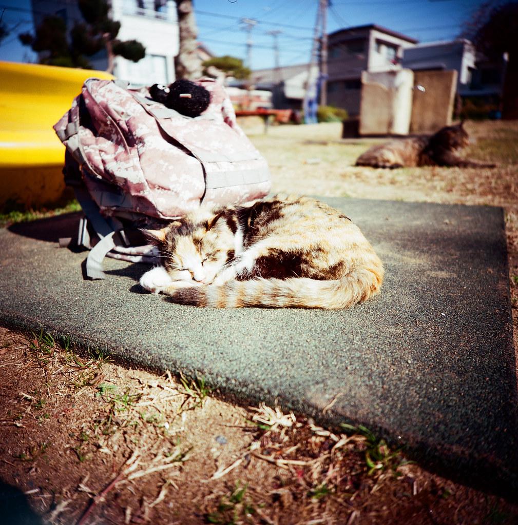 銚子市 Choshi, Japan / Kodak Pro Ektar / Lomo LC-A 120 悠閒的躺在我的背包旁邊,我也悠閒的把妳記錄下來。  好像每次旅行都會遇到貓,幾乎吧!  Lomo LC-A 120  Kodak Pro Ektar 100 120mm  8281-0005 2016-02-05 Photo by Toomore