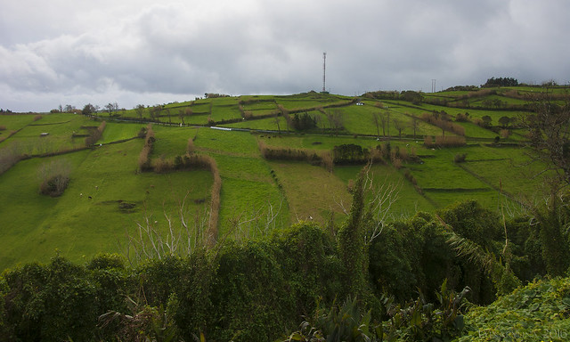 the Azores way of fencing - HFF!