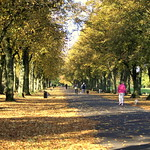 Changing seasons at Haslam Park, Preston - 4