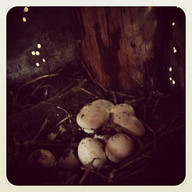 secret stash of eggs