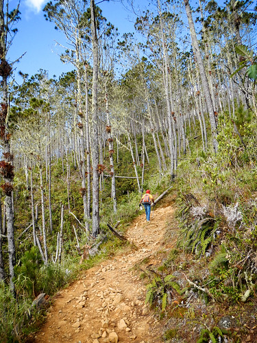 mountain trekking trek dominicanrepublic hiking hike adventure caribbean westindies adventuretravel ecotours uncommoncaribbean iguanamama