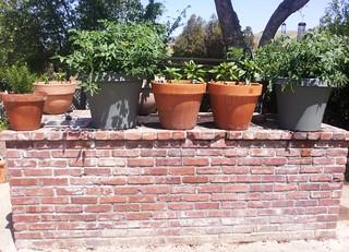 My Whimsical Green Garden Is Flourishing 5