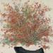 吳士偉‧滿庭芳水墨‧紙本設色‧77.5x70.5 cm‧2012