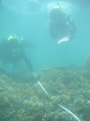 每年夏天的珊瑚體檢與淨灘 圖為2009年志工水下作業情形 照片為潛水志工提供