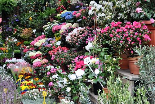 Flower market on Ile de la Cité
