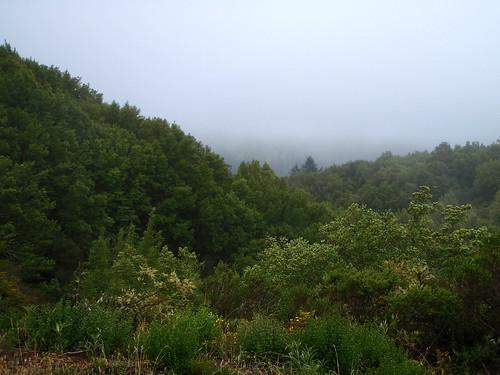 Bolinas Ridge / Pine Mtn / San Geronimo Ridge
