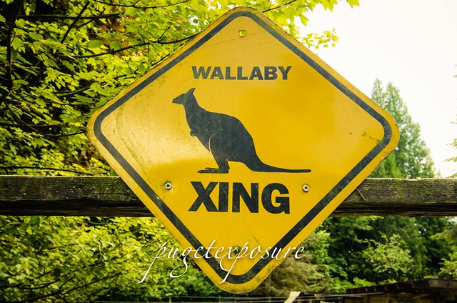 Wallaby Xrossing