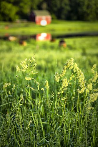 barn us unitedstates cows farm terry mn lakeelmo canoneos6d macvey tmac2272
