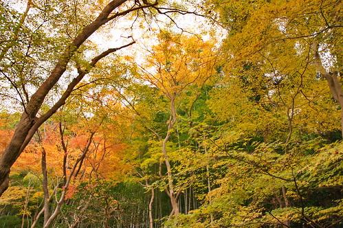 【写真】2012 紅葉 : 祇王寺/2021-09-05/IMGP7854