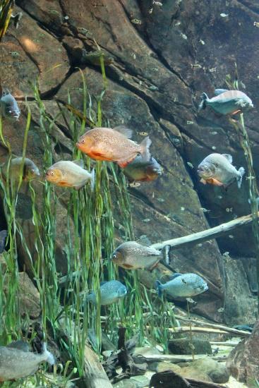 Georgia Aquarium, 4