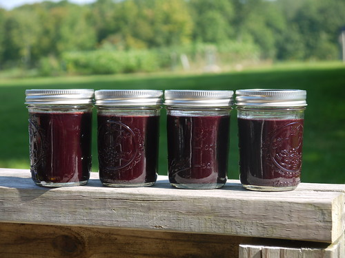 Freshly made elderberry jelly