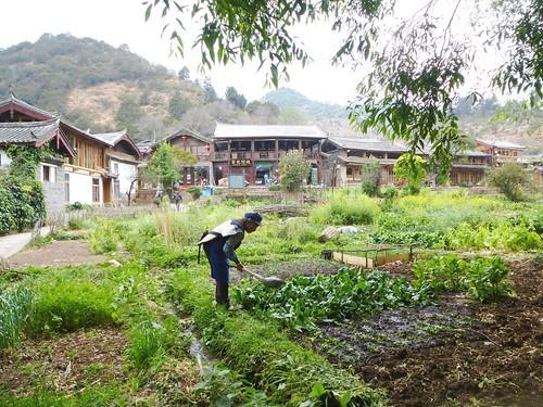 Yunnan13-Shuhe-Nature (6)