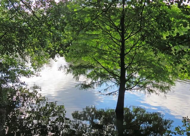 Artist Tree Reflections3