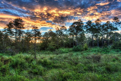 sunrise florida naples nik hdr corkscrewswampsanctuary photomatix