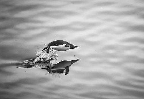 Penguin Jump by mbleke