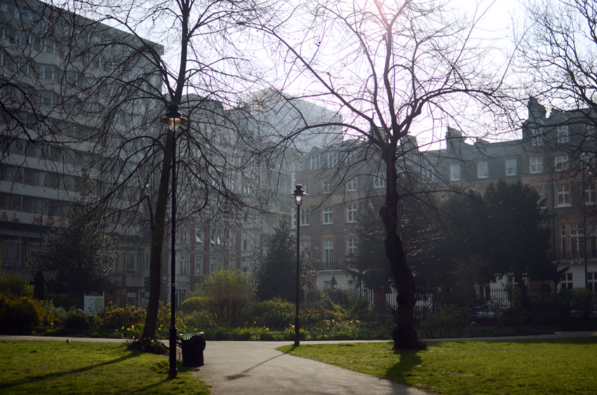 light russell square dafodils