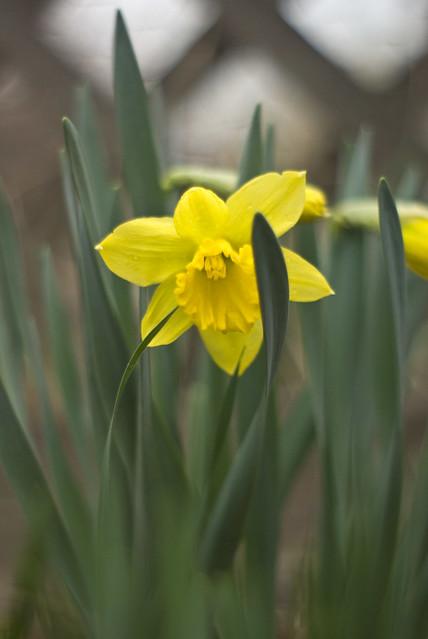 Tiny Spring