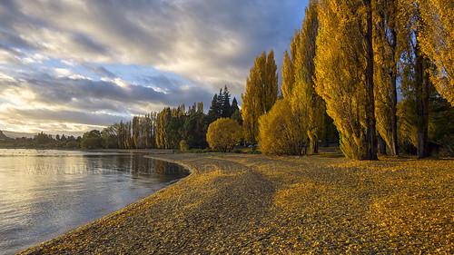morning autumn newzealand lake leaves sunrise foliage southisland wanaka sonya6000
