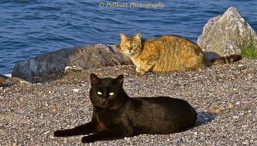 Turkish photo shooting at the beach 3