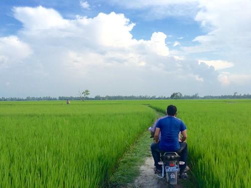 bogra bangladesh natrure green landscapre bangla