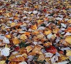 Maka daun pun berguguran ke bumi - The foliage