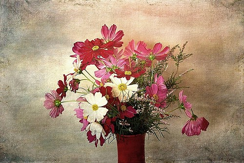 Floral composition with cosmos