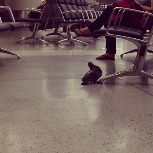 Why yes that is a pigeon chilling in Penn Station.