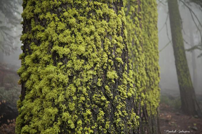 Moss in Mist