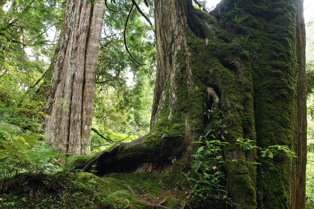 巨木群,與往拉拉山的路上-026