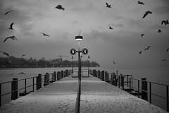birds @ pier 5 & 4