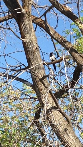 153_2013_up by teach.eagle