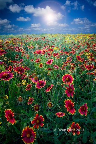 blue red sky sun sunlight plant flower green nature floral beautiful field yellow rural sunrise landscape dawn golden colorful texas unitedstates bright blossom indian country sunny nobody sunflower rays sunrays benbrook indianblankets