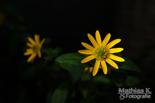 Winzige Blüte