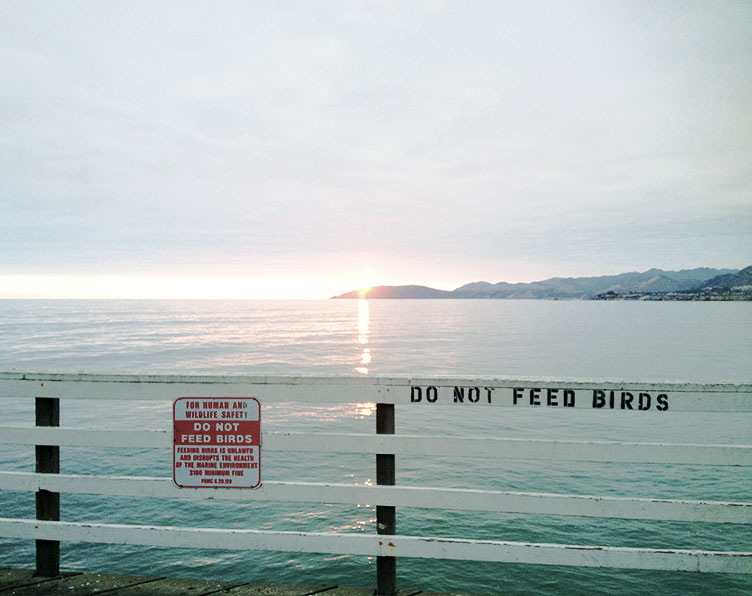 do-not-feed-the-birds-pismo-beach-seagull