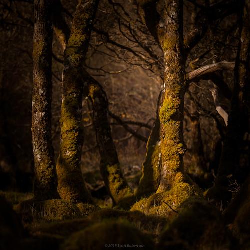 Glenfinnan woods