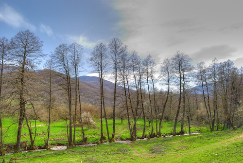 trees green river spring greece macedonia timeless florina makedonia μακεδονια