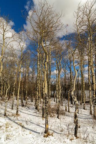 sky mountain snow canada tree forest grande spring warm peace country hill alberta saskatoon mtn prairie aspen beaverlodge
