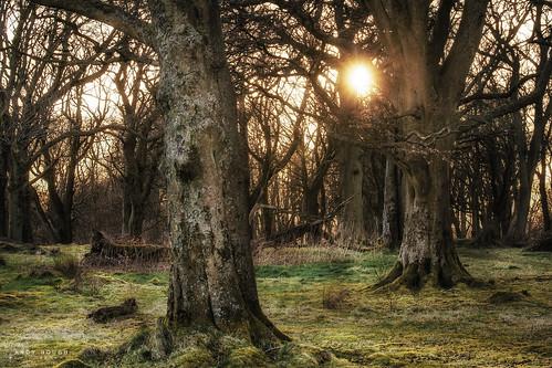 wood trees sunset sun sunlight woodland scotland glow unitedkingdom sony gb goldenhour rutherglen bigwood cathkinbraes a99 sonyalpha andyhough slta99 andyhoughphotography