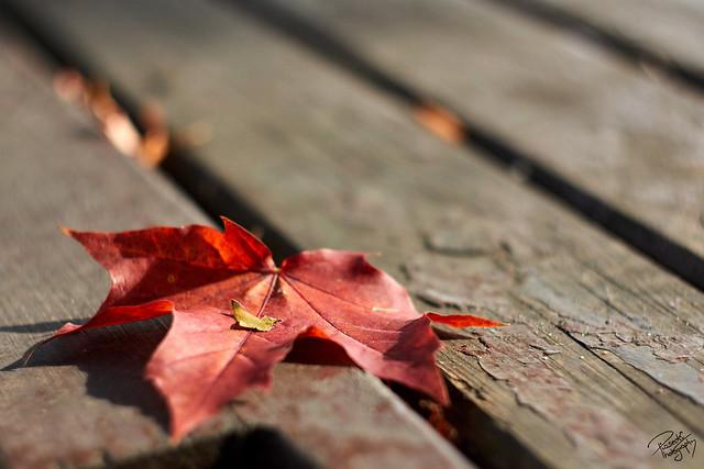 In a warm autumnal hug