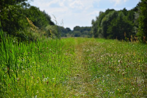 path road nature landscape grass green summer view closeup plants dolinawarty łódzkie lodzkie polska poland strońsko