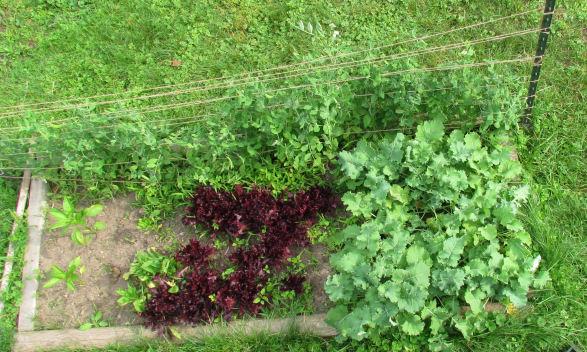 Garden Mid June 2011