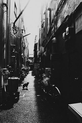 [フリー画像素材] 建築物・町並み, 都市・街, 猫・ネコ, 街角, 風景 - 日本, 日本 - 東京, モノクロ ID:201204252000