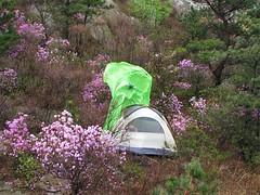 山顶风确实很大。一不小心,野蛮人的帐篷外帐给刮飞了。