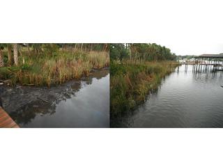 Alafia River north bank 3/4 miles east of US301
