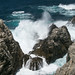 Small photo of Point Lobos