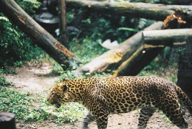 Animal #6