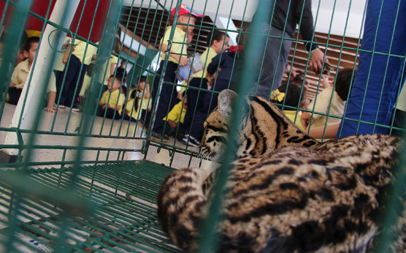 zoologico 6