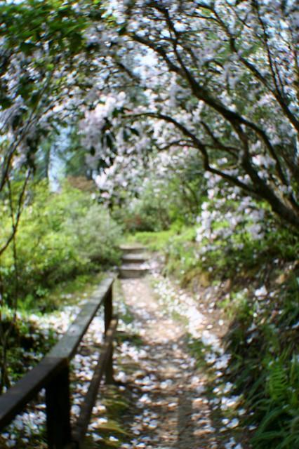 Crarae Garden, Argyll & Bute, Scotland