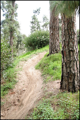 Balboa BMX Trails (7)