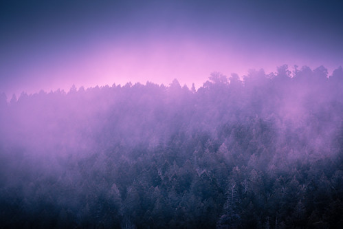 morning blue trees light usa mountain newmexico santafe nature fog landscape photography countryside us photo photographer purple unitedstates image unitedstatesofamerica country foggy fav20 100mm photograph 100 february nm fav30 f28 200mm fav10 2013 fav40 ef200mmf28liiusm ¹⁄₁₂₅sec eos5dmarkiii mabrycampbell february152013 201302150h6a0307